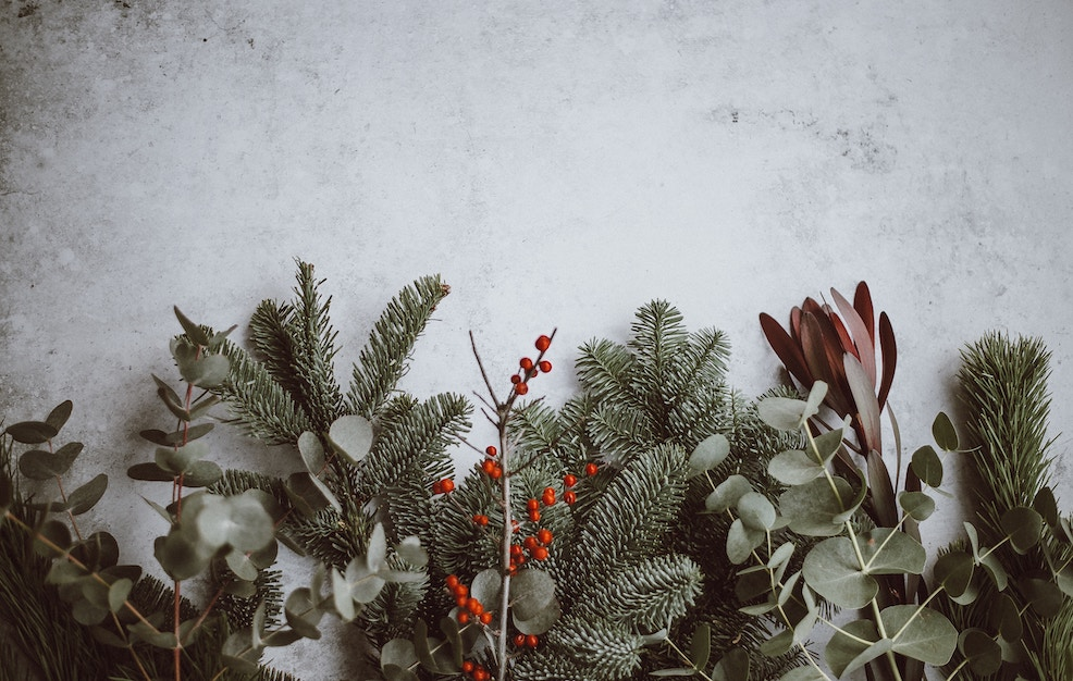 Merry Xmas … a special December snap